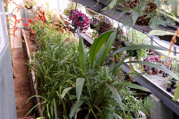 Invernadero, jardín botánico de la Universidad de Sofía.