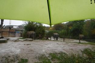 Elefanten im Regen