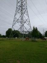 Pferde unter Strom
