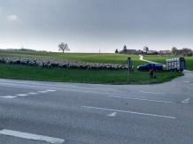 Schafherde neben einer Straße