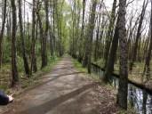 Im Auenwald zwischen Lehde und Leipe. Der Kuckuck hat gefehlt.