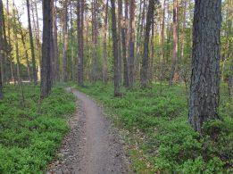 Premium-Trail durch den Wald