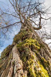 Baum Detail Rinde