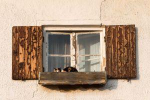 altes Fenster mit Katze
