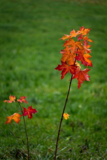Letzte Blätter...