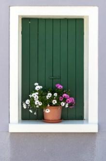 Still Life in a Window