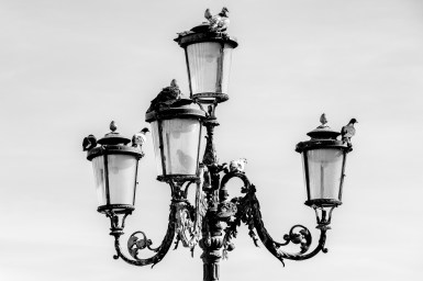 Doves on a lamp in Venice