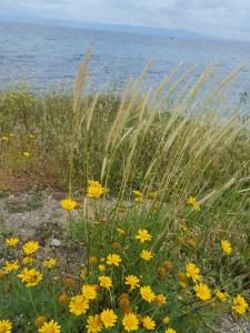Bouquet de fleurs sauvages face aux côtes turques d'où venait ce bateau chargé de migrants.