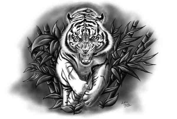 Illustration und Tattoo Fauchender Tiger