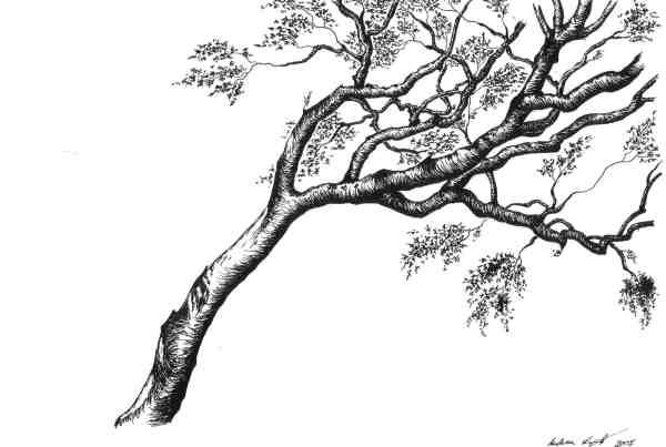 Tuschezeichnung eines Baumes