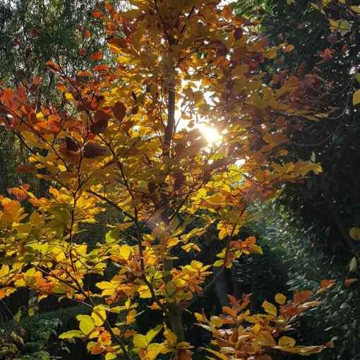 Tag…, Coronakrise,  Meditation und Wochenendgrüße