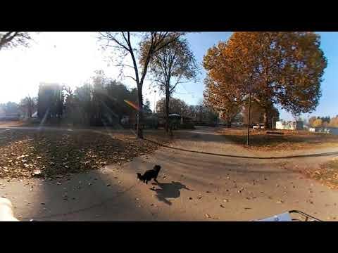 Video a 360° - Prova di una bici oBike a Torino (Parco della Pellerina) - VIDEO