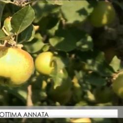 Le mele della Valle d'Aosta - intervista a Saint Grat TGR Vda (YouTube)