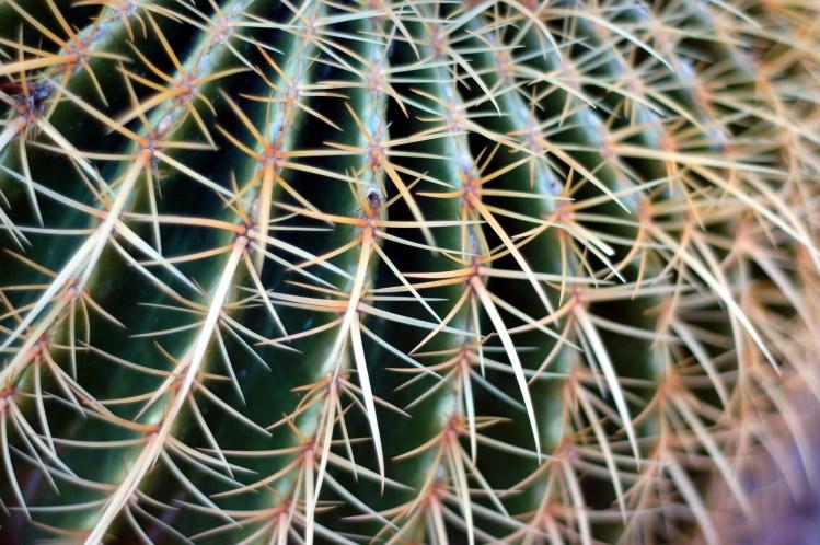 Close up of barrel cactus, Cave Creek, AZ