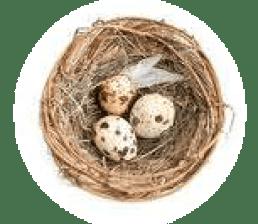 Testimonio El nido de Zoraida