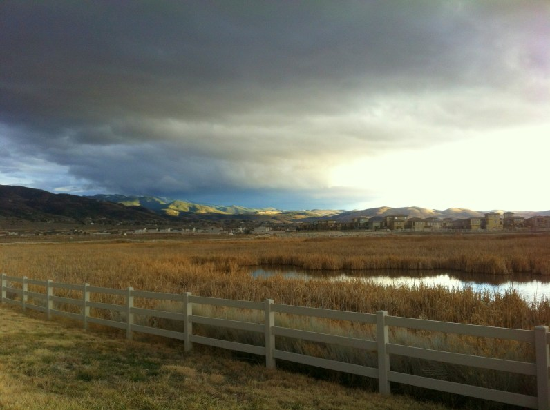the wetlands Damonte ranch feb 2014