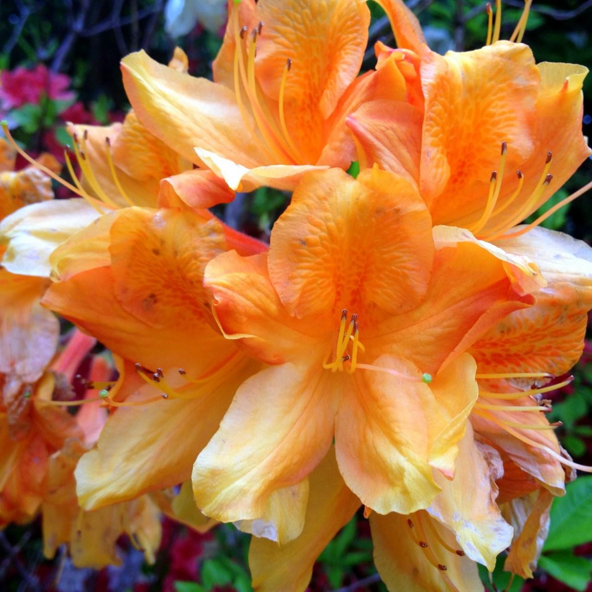 Garden flowers 4
