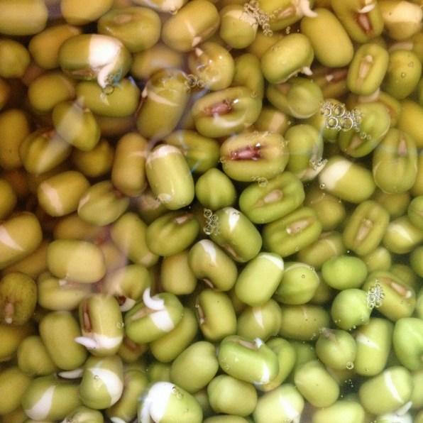 Soaking mung beans