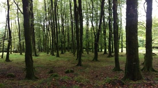 Doonane Woods