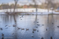 January Lensbaby-17