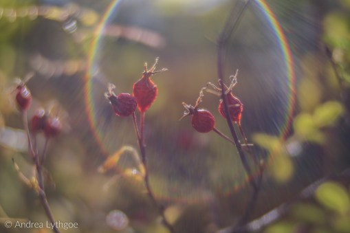 Flare Embraced Berries-1