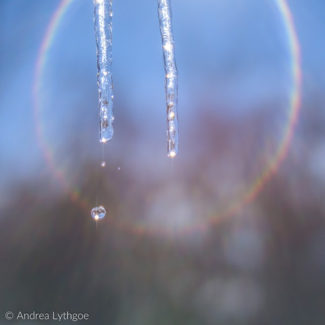IcicleLensbaby-1