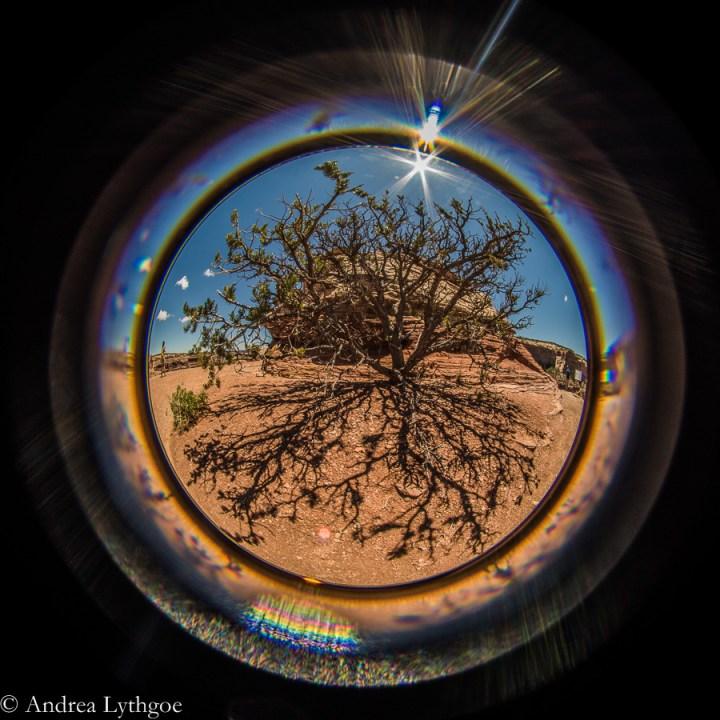 LensBabyRedRocks-10