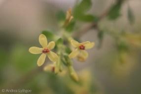 Lensbaby Garden-10