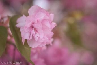 Lensbaby Garden-2