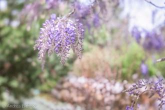 Lensbaby Garden-5