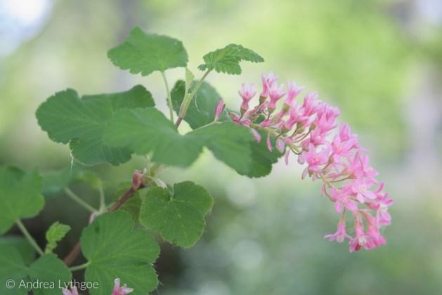 Lensbaby Garden-6