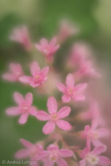 Lensbaby Garden-7