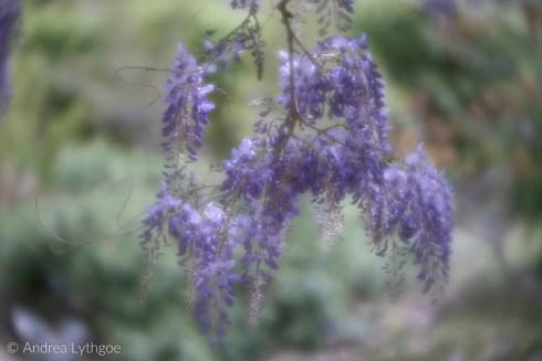 Lensbaby Garden-8