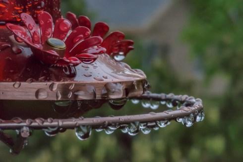 Wet Feeder-12