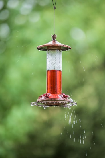 Wet Feeder-2