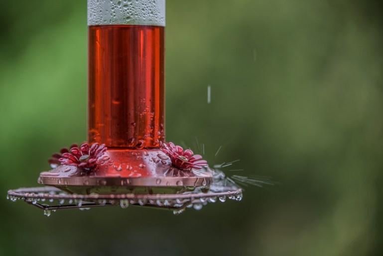Wet Feeder-3