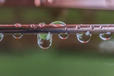 Wet Feeder-9