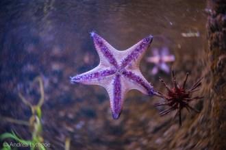 LBT-Aquarium-1