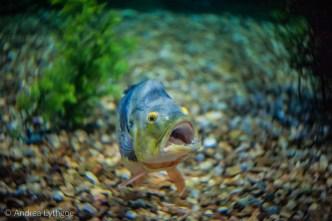 LBT-Aquarium-10