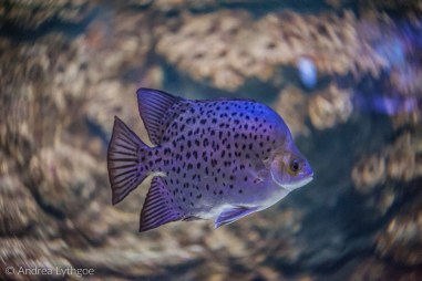 LBT-Aquarium-2