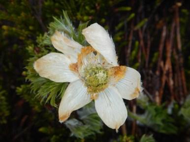 Een enkele bloem probeerde al te bloeien