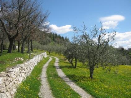 primavera-a-vertine-49