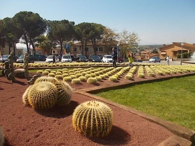 cactus giromagi castiglion del lago (21)
