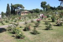 roseto di roma (8)