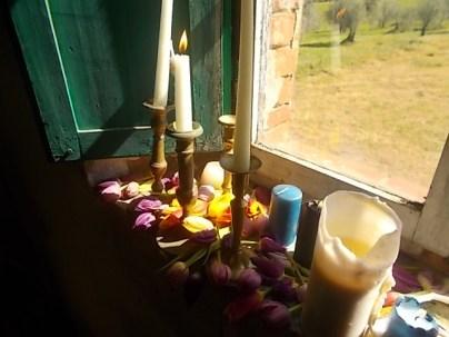 slow flowers podernovi chianti castello di brolio (17)