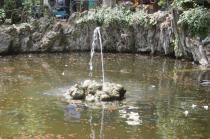 lizza siena degrado lago dei cigni (6)