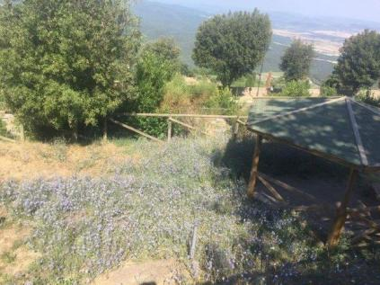 abbandono giardini montalcino (1)