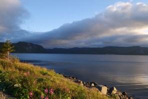 Random Newfoundland beauty