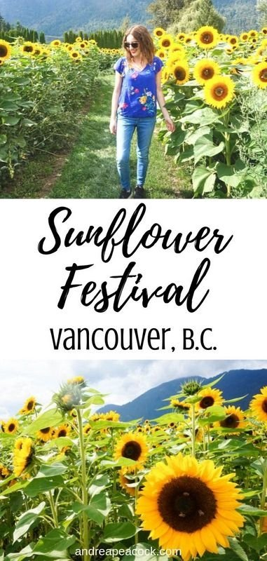 Visiting the Chilliwack Sunflower Festival Near Vancouver, Canada