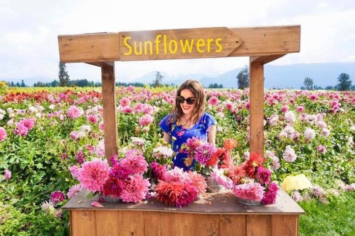Visiting the Chilliwack Sunflower Festival Near Vancouver, British Columbia, Canada